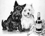 Black & White Whisky